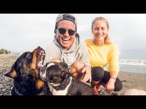 WHO LET THE DOGS OUT? | VLOG² 102