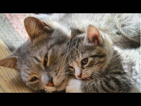 Mother Cat And Cute Kittens - Mom Cat And Her Baby Cats Moments || NEW