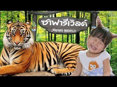 เที่ยว ประเทศไทย เฌอแตมพาเที่ยว ซาฟารี เวิลด์ # 2 ตะลุยสวนสัตว์เปิด ชมแรด ให้อาหารเสือกัน | Safari World Thailand
