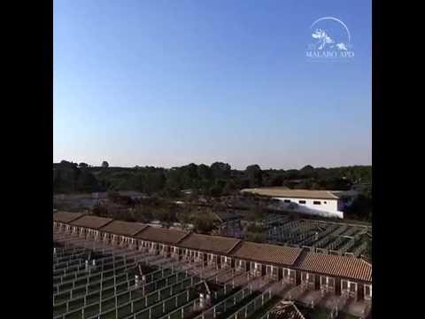 Instagram vistas aéreas do MALABO PET RESORT