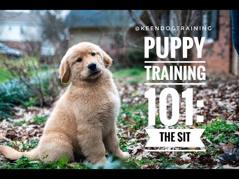 Puppy Training 101: The Sit