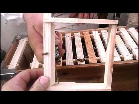 Eco Bee Box - Utah Hive Langstroth Top-Bar