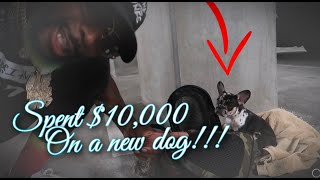 BUYING ONE OF THE MOST EXPENSIVE DOGs inTHE WORLD!!! $10,000!!!?