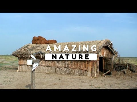 Beautiful Nature Video in Full HD - The Lifestyle of the Village People Episode 1 - 9 Minute