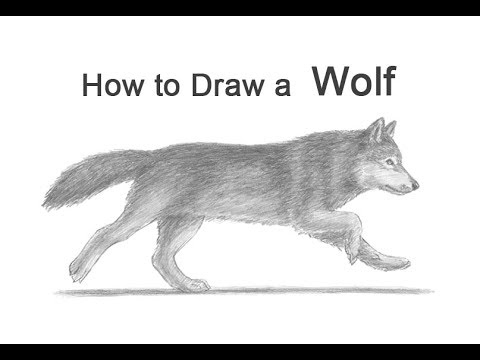how-to-draw-a-wolf-(running)