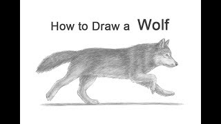 How to Draw a Wolf (Running)