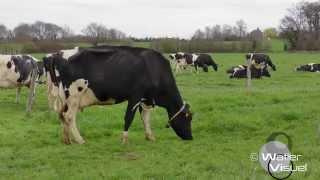 Réalisation Films Vidéo Elevage vaches Prim-Holstein en pâture sur prairie temporaire