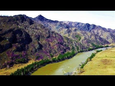Цветущие горы возле реки Катунь на Алтае