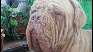 Dogue De Bordeaux Time Lapse Drawing