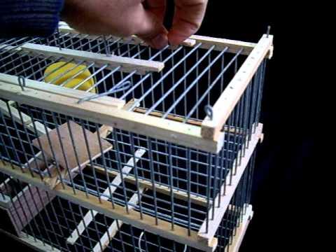 piege oiseaux a vendre birds trap cage for sale youtube. Black Bedroom Furniture Sets. Home Design Ideas