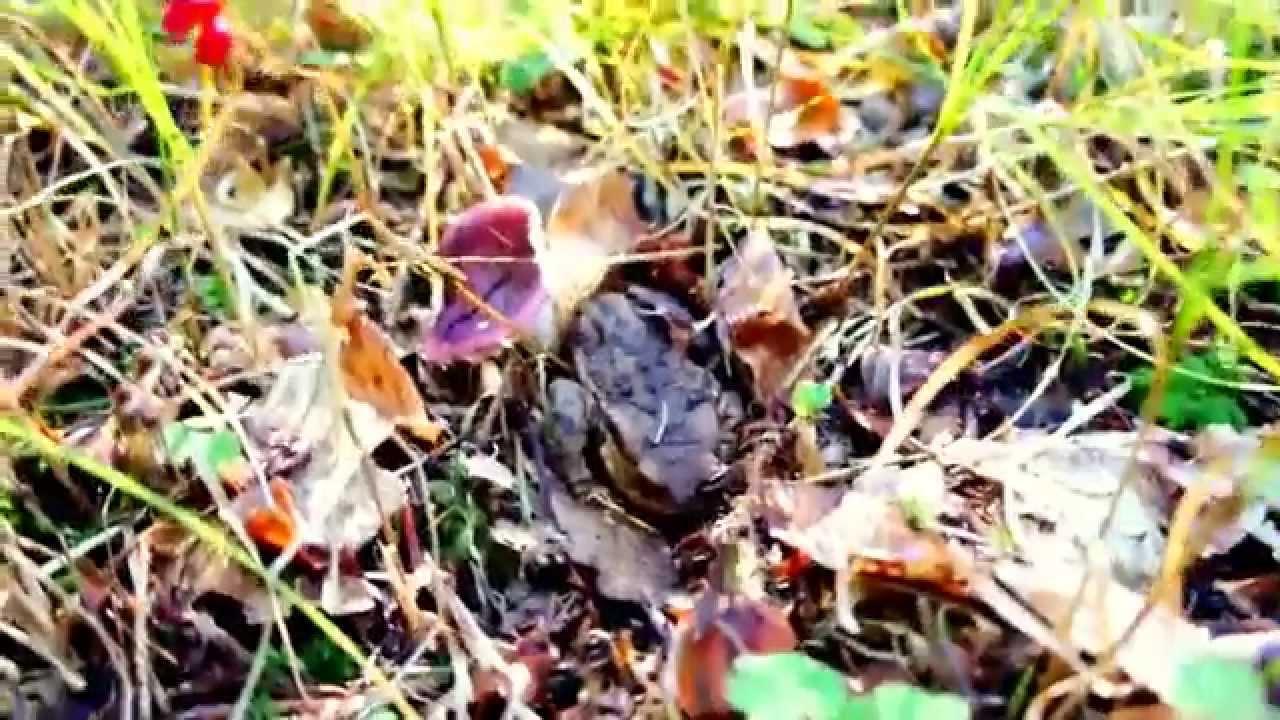 Frog in Hibernation Mode for Winter