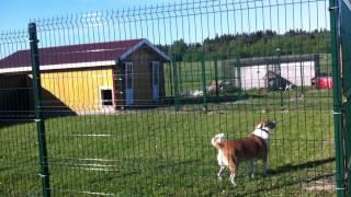 гостиница для собак ЗооЭкоОтель