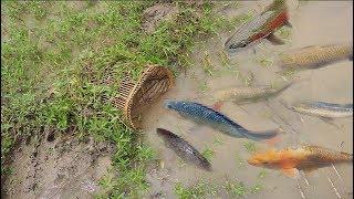Fishing Trap | Fishing lots of Fish using Bamboo Fish Trap | Amazing Fishing Videos