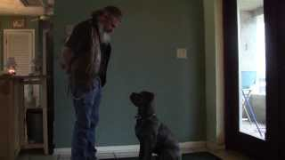 Clicker Training (and Luring) 4 Month Old Cane Corso Puppy From Chiefland Florida