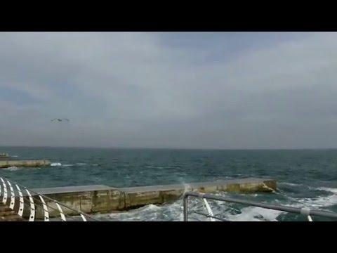 Чайки над морем / Seagulls over the sea
