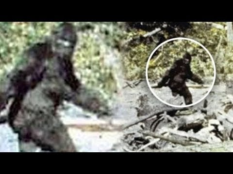 Top 5 Criaturas Misteriosas Captadas en Camara