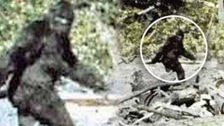 Top 5 Criaturas Misteriosas Captadas En Cámara (2da parte)