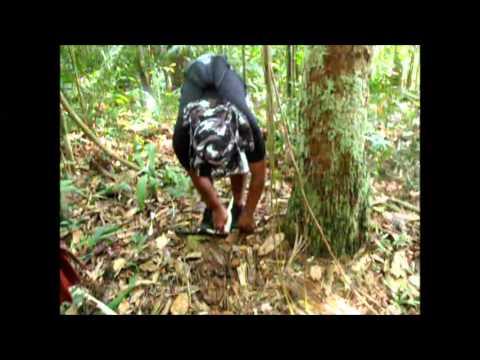 Amazon Rainforest Survival Trip