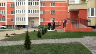 Вор украл туи г.Пинск.Им оказался нейкий Рома с улицы Мопровской.