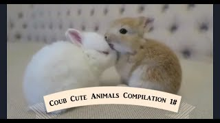 Coub Cute Animals Compilation 1#