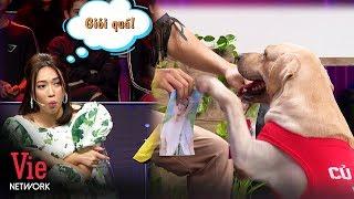 Chú chó Củ Cải khiến cả trường quay vỗ tay rần rần vì tài phân biệt hình nghệ sĩ siêu cừ |Ai Là Số 1