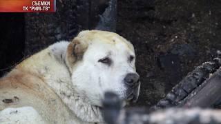 Собака спасла из пожара хозяев / Новости