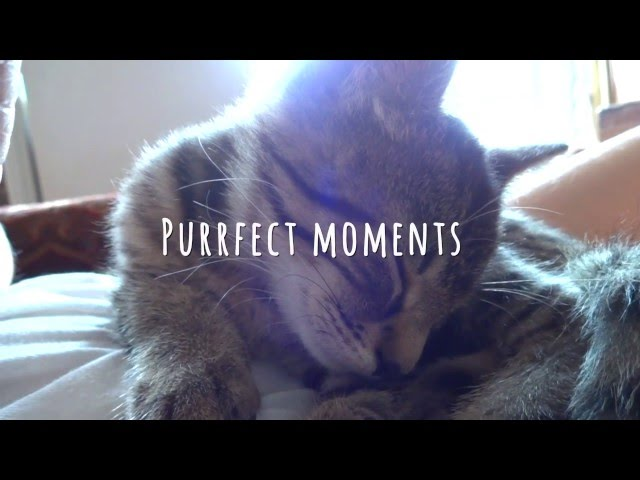 Purrfect moments: Cat purrs and cuddles