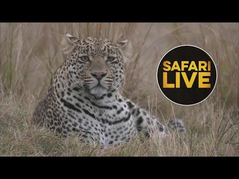 safariLIVE - Sunrise Safari - July 16, 2018