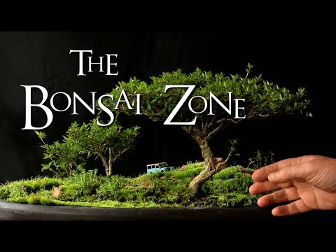 The Bonsai Zone, Show Preparation, Part One, Sept 2017