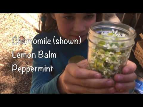 Medicinal Herb Collaboration (with Rain Country Homestead)