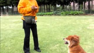 家庭犬しつけ教室。基本練習の動画です。茨城県水戸市近辺で活動してい...