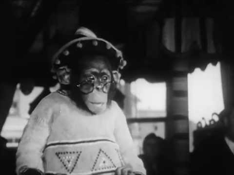 Circus At The Zoo - Circa 1950 - CharlieDeanArchives / Archival Footage