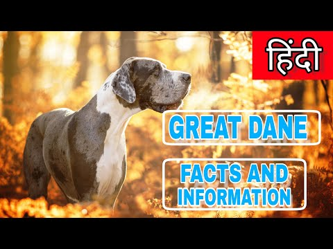 Great Dane dog Information & Facts In HINDI | Pet Info