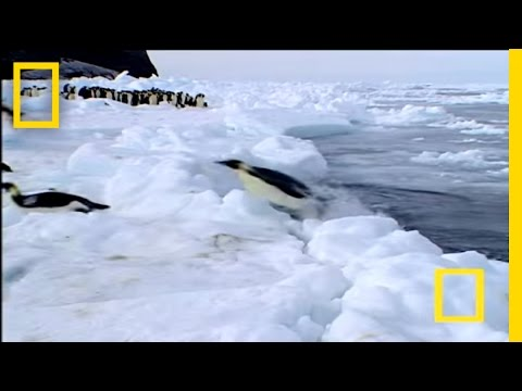Penguin vs. Leopard Seal - YouTube