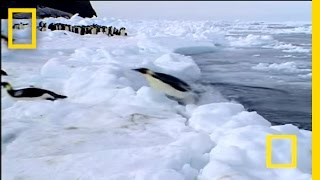 Penguin vs. Leopard Seal