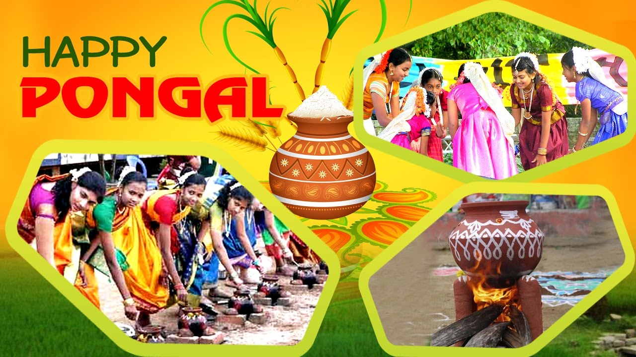 Pongal Documentary Pongal Festival Celebration