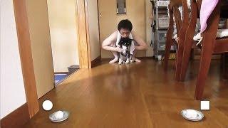 ???? ????????? Shiba Inu Kuro Likes Round Object?