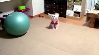 TOP 10 dog barking videos compilation 2019 Funny dogs