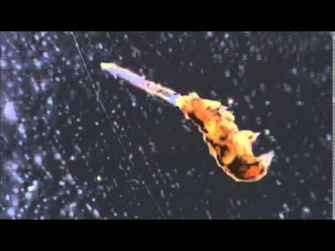 A tardigrade eating a nematode - YouTube