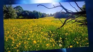 Uplifting Emotional Trance Selections 67