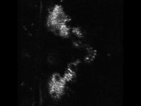 Fruit Fly Neuron Activity
