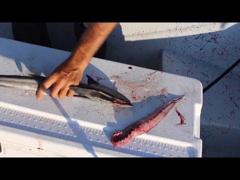 Catch And Cook Remora? Trash Fish Taste Test