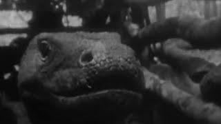 Attenborough Catches a Komodo Dragon  - Zoo Quest for a Dragon - BBC