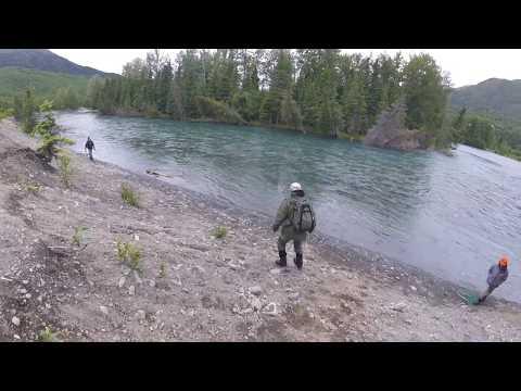 "Kenai River Sockeye Salmon ""Red"" Run 2017"