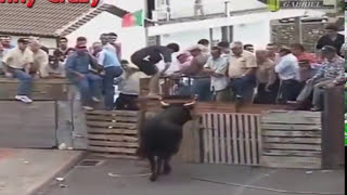 ЖЕСТЬ Most Awesome BullFighting festival in Portugal Best Funny Video Try Not to Laugh Bull Fails