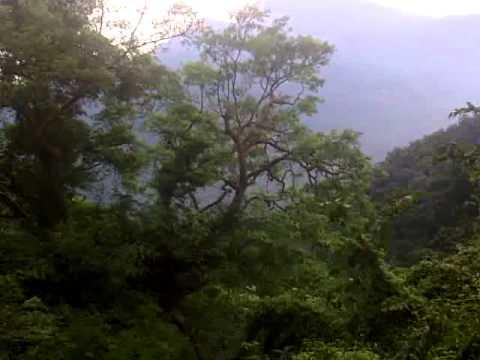 Nilgiri Mountain Railway - Ooty Train  - Fog & Sunlight