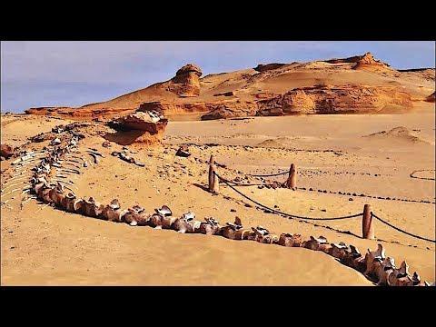 Geheimnisvolle Dinge, die sich in der Wüste verstecken!