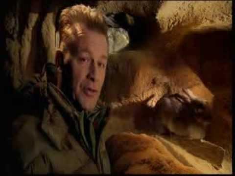 The Burrowers: Animals Underground  Episode 1