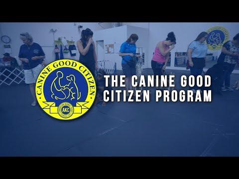 AKC CGC Program - Why Canine Good Citizen (CGC)?