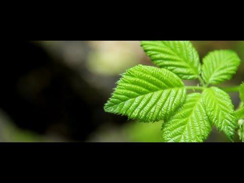 Canon 650D / Rebel T4i: Short Film (Film Look)